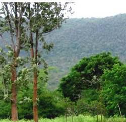 wild-valley-farm-resort-bangalore