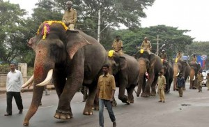 Elephants during Dasara 2013
