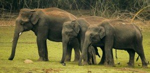 About Kabini