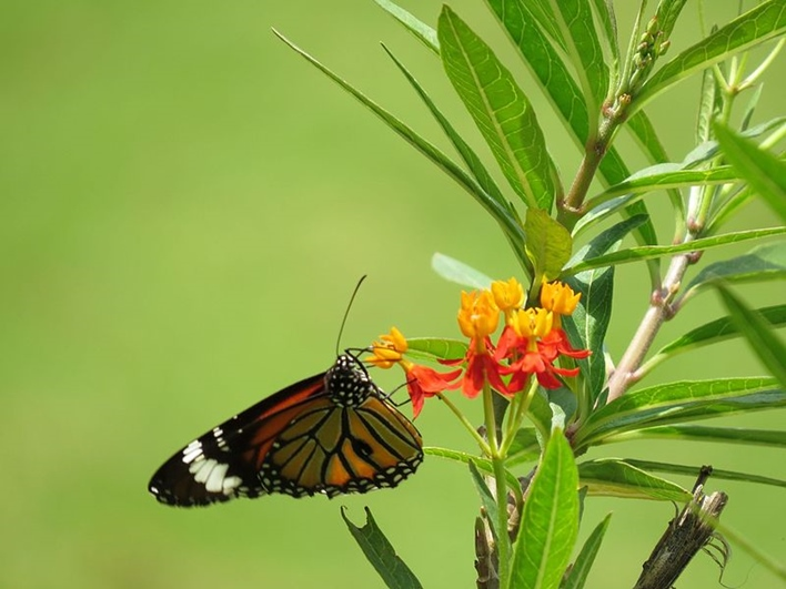 Butterfly park, parks in Bangalore