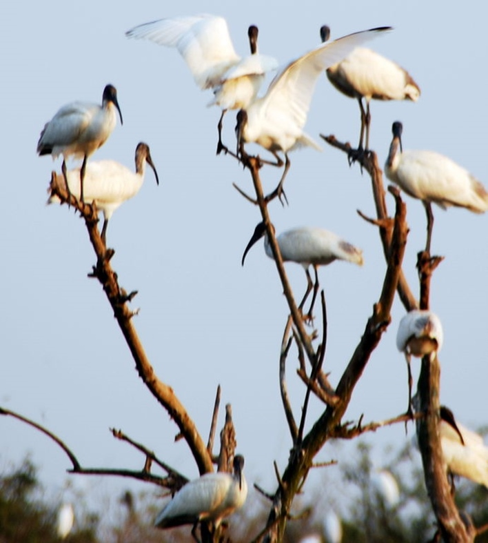 Gudavi Bird Sanctuary, Shimoga bird sanctuary