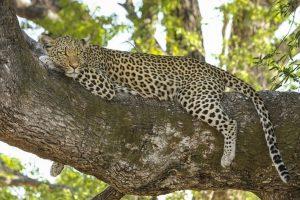 Deva Raya Wildlife Sanctuary , Sanctuary Bellary