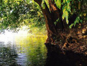 Dandeli, river Kali