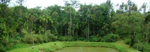 the hidden valley, chikmagalur