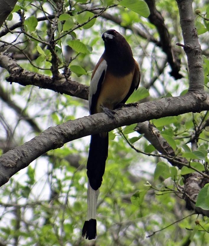 Bird Watching in Coorg