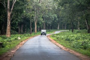 Nagarhole National Park – Where the Wild Resides