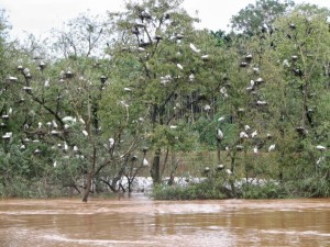 Mandagadde Bird Sanctuary