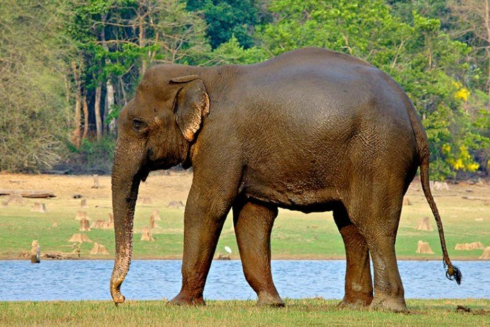 Near Mysore, nagarhole national park, kabini