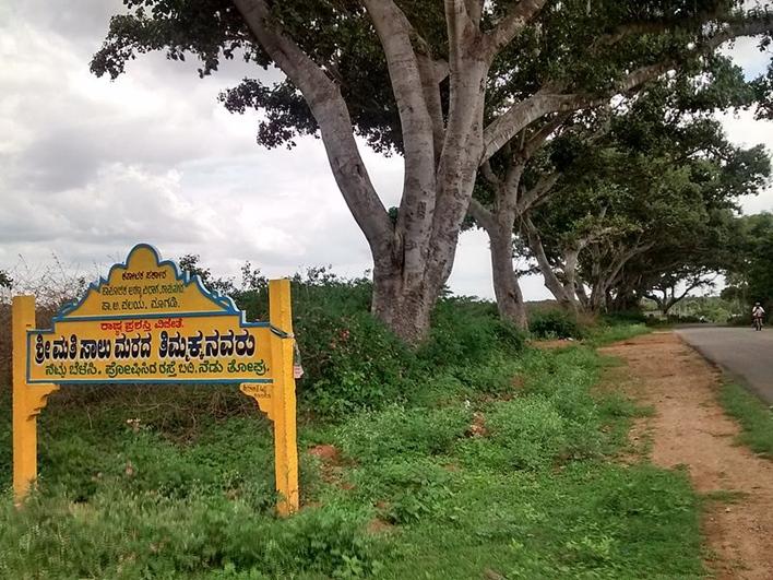 Saalumarada Thimmakka
