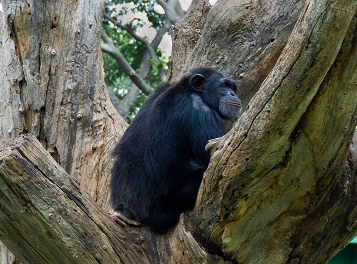Shri Chamarajendra Zoological Gardens , Mysore Zoo