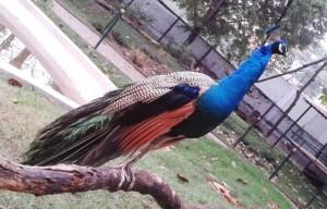 Karanji Lake Nature Park, Mysore