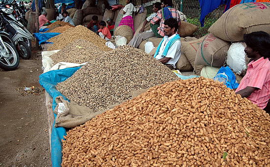 Groundnut festival in Bangalore. Image source http://www.mangalorean.com/news.php?newstype=broadcast&broadcastid=102425