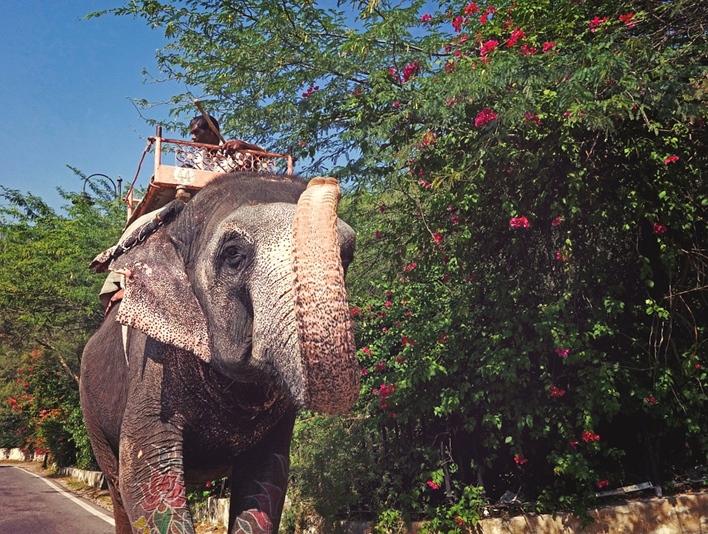 Sakrebailu Elephant Camp, Shimoga.