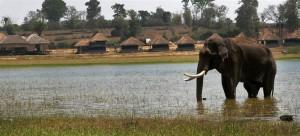 Elephant at The Bison Resort, Kabini
