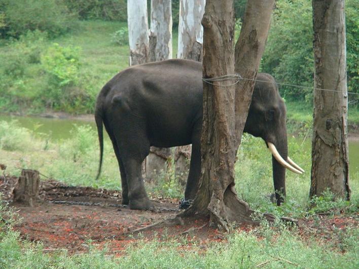 Dubare, Dubare elephant camp