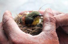 Bird Rescuer in Bangalore